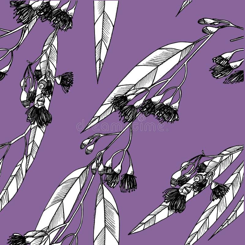 Modèle sans couture avec des eucalipts dessins photo libre de droits