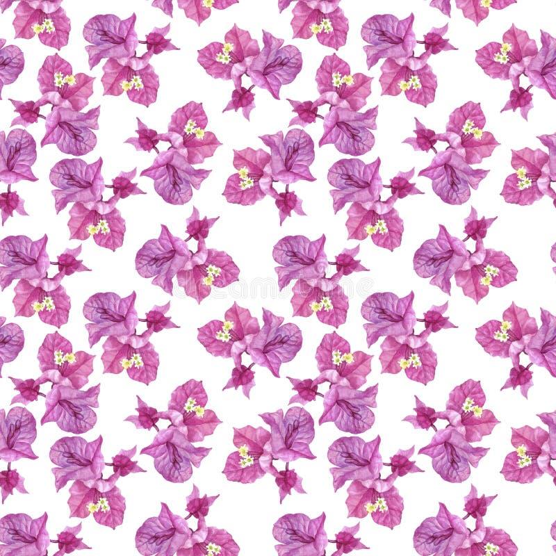 Modèle sans couture avec des fleurs de bouganvillée illustration stock