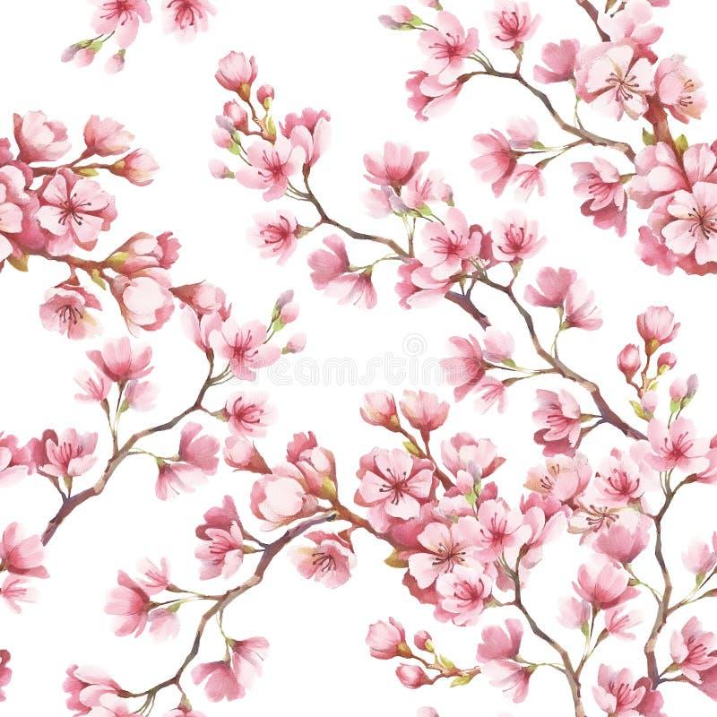 Modèle sans couture avec des fleurs de cerisier Illustration d'aquarelle illustration stock