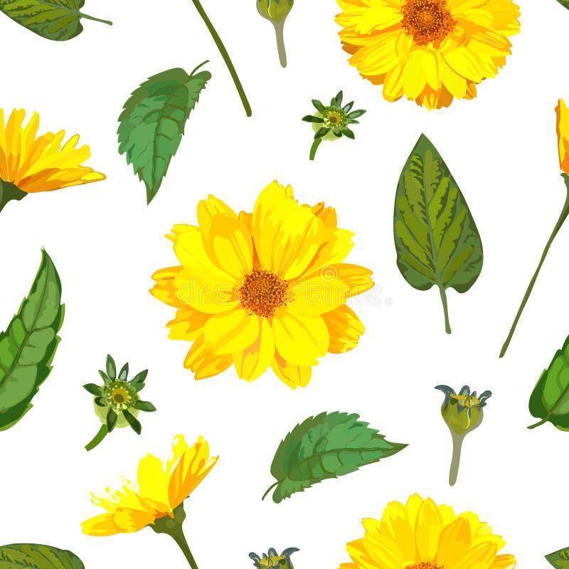 Modèle sans couture avec des fleurs de chrysanthèmes Dos floral de vecteur illustration stock