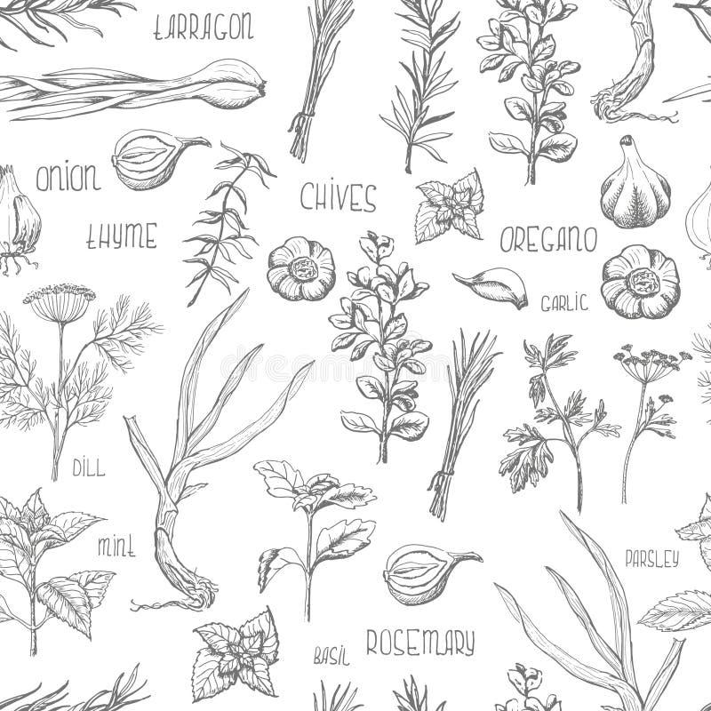 Modèle sans couture avec des herbes et des épices illustration stock