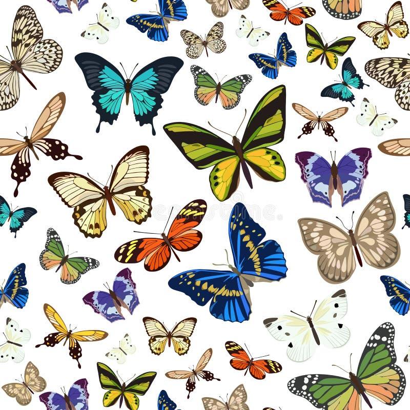 Modèle sans couture avec différents types de papillons multicolores Illustration de vecteur illustration de vecteur