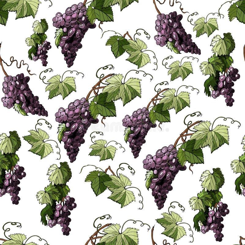 Modèle sans couture avec la brindille du raisin violet et des feuilles d'isolement sur le fond blanc illustration stock