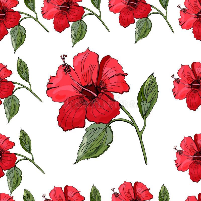 Modèle sans couture avec la fleur tirée par la main et colorée de ketmie Objets d'isolement sur le fond blanc illustration libre de droits
