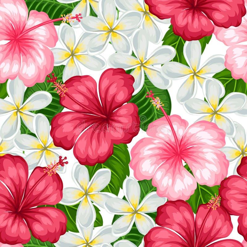 Modèle sans couture avec la ketmie tropicale et le plumeria de fleurs Fond fait sans masque de coupage Facile à utiliser illustration libre de droits