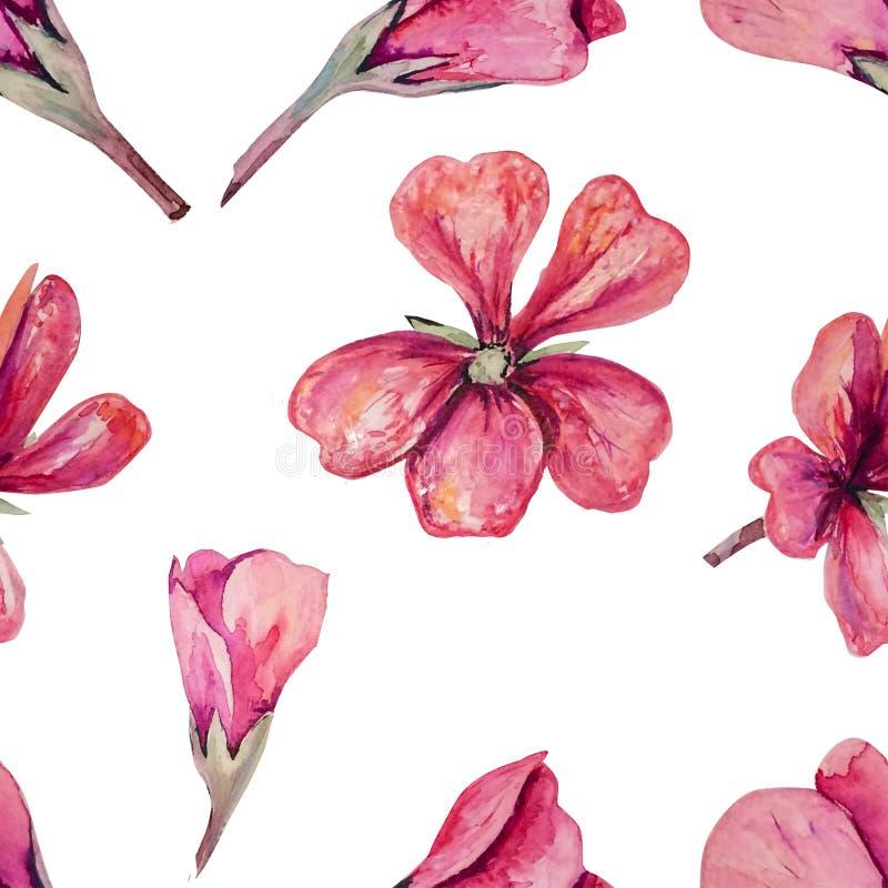 Modèle sans couture avec le géranium rose mou pour aquarelle photo stock