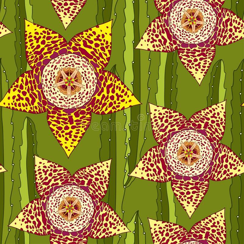 Modèle sans couture avec le Stapelia Genre des usines culture basses de succulent de tige Série de différents succulents illustration stock
