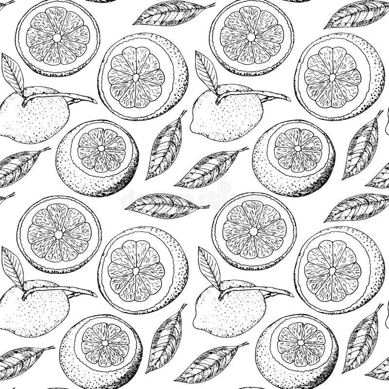 Modèle sans couture avec les citrons et les feuilles tirés par la main illustration stock