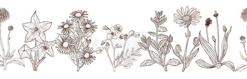 Modèle sans couture avec les herbes médicinales tirées par la main d'encre images libres de droits