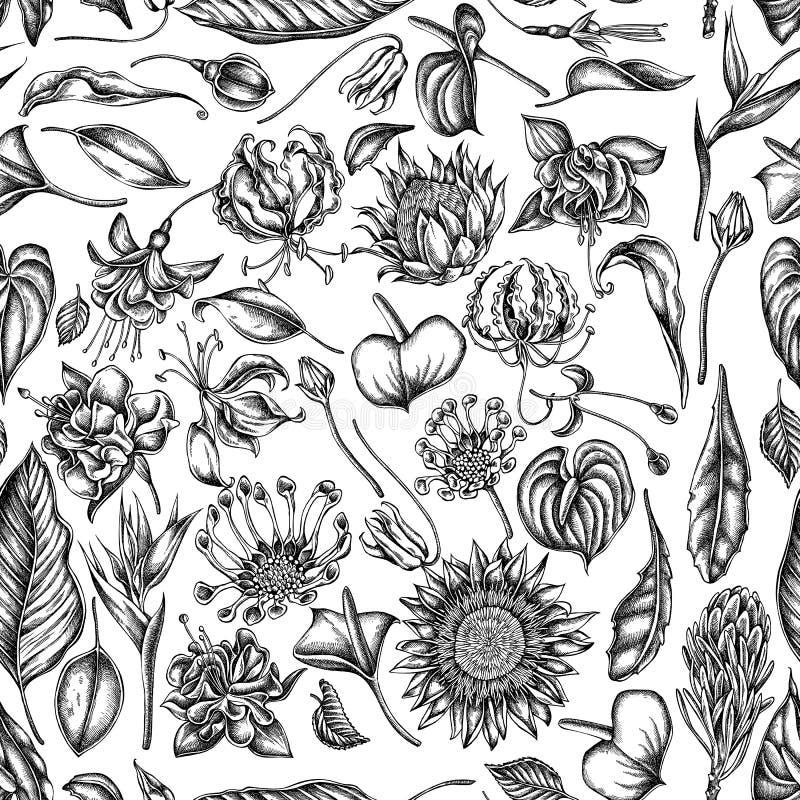 Modèle sans couture avec les marguerites africaines noires et blanches, fuchsia, gloriosa, protea de roi, anthure, strelitzia illustration stock