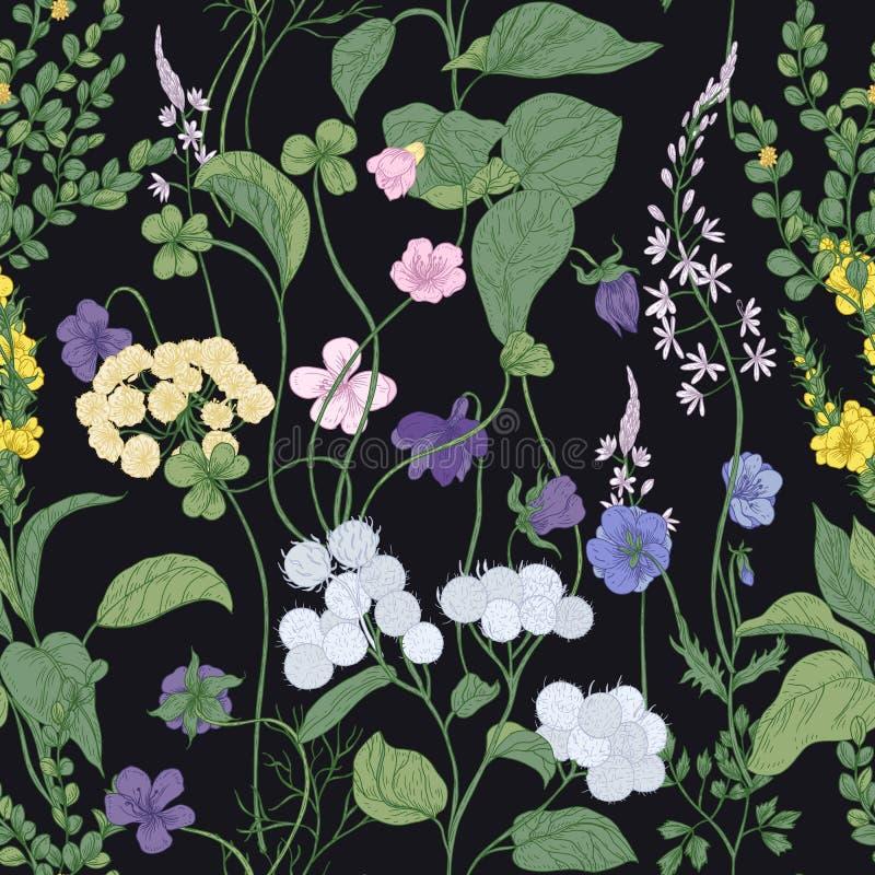 Modèle sans couture botanique avec les fleurs sauvages de floraison et les plantes fleurissantes de pré sur le fond noir Contexte illustration stock