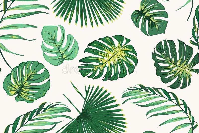 Modèle sans couture botanique de verdure tropicale exotique de fougère Feuilles vert clair réalistes vives de monstera de palmier illustration stock