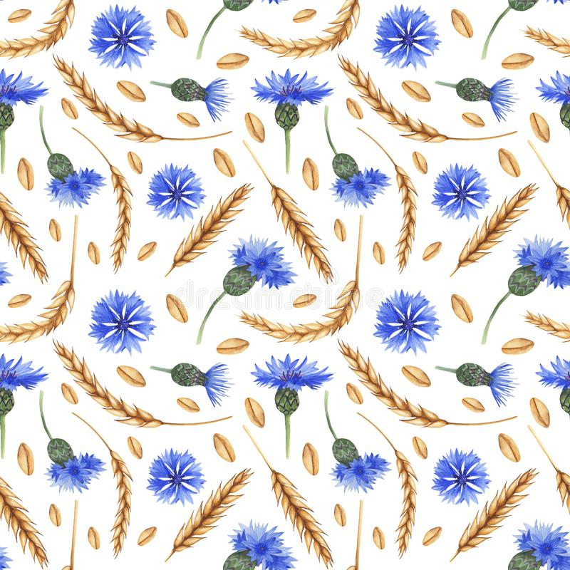 Modèle sans couture d'aquarelle avec des oreilles de blé et des bleuets illustration libre de droits