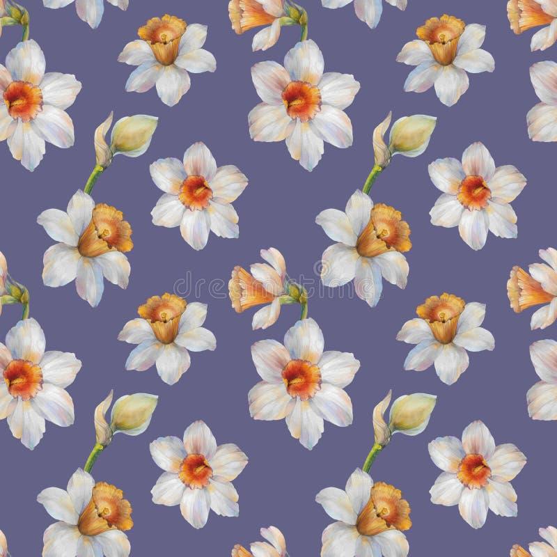 Modèle sans couture d'aquarelle des fleurs de narcisse Illustration d'aquarelle illustration stock