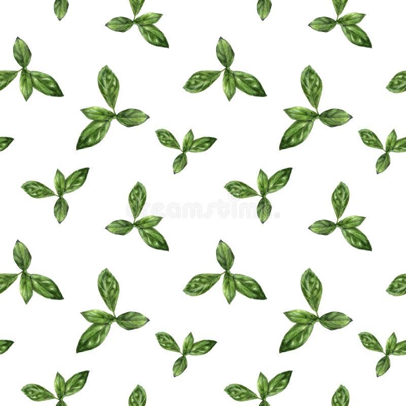 Modèle sans couture d'isolement par herbe tirée par la main de basilic d'aquarelle illustration stock