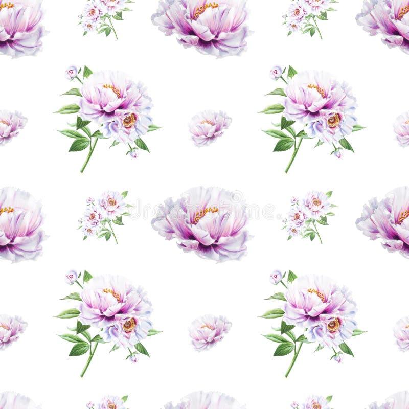 Modèle sans couture de belle pivoine blanche Bouquet des fleurs Texture florale Dessin de marqueur illustration stock