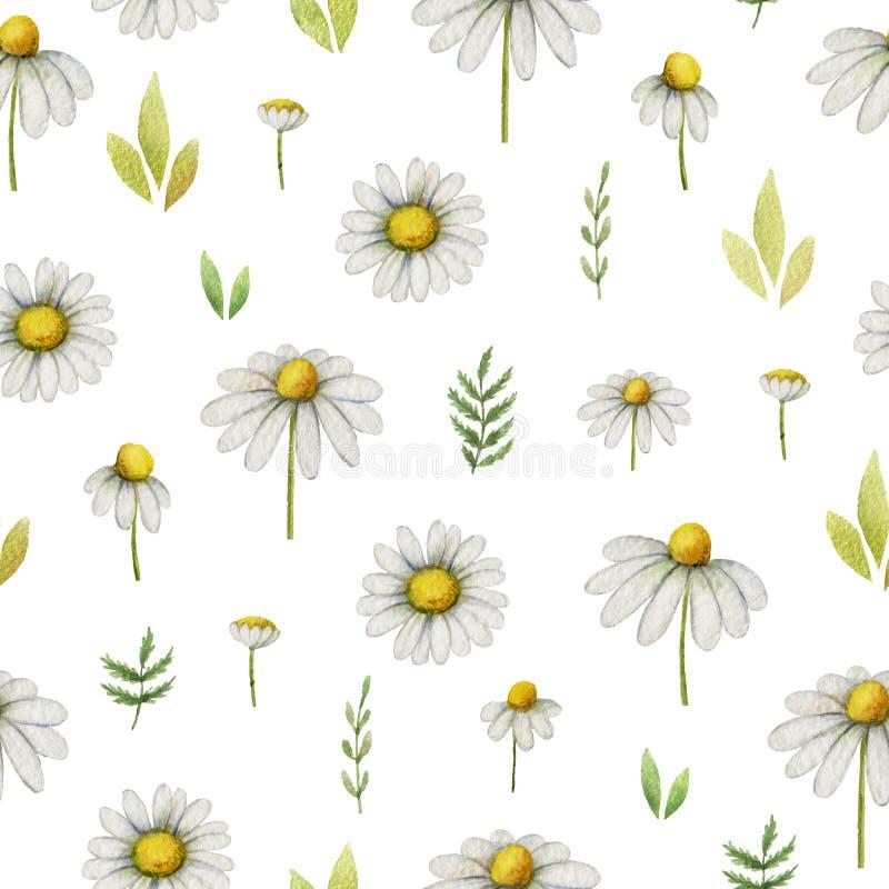 Modèle sans couture de camomille d'aquarelle des fleurs et des feuilles sur un fond blanc illustration libre de droits