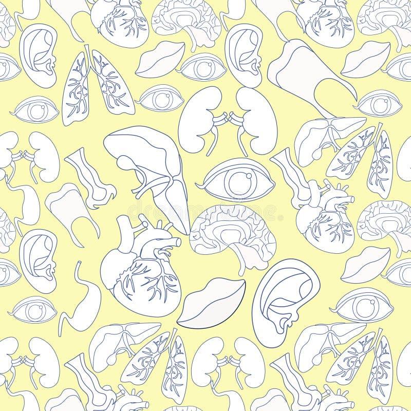 Modèle sans couture de coloration avec l'organe humain de coeur, poumons, cerveau, illustration stock