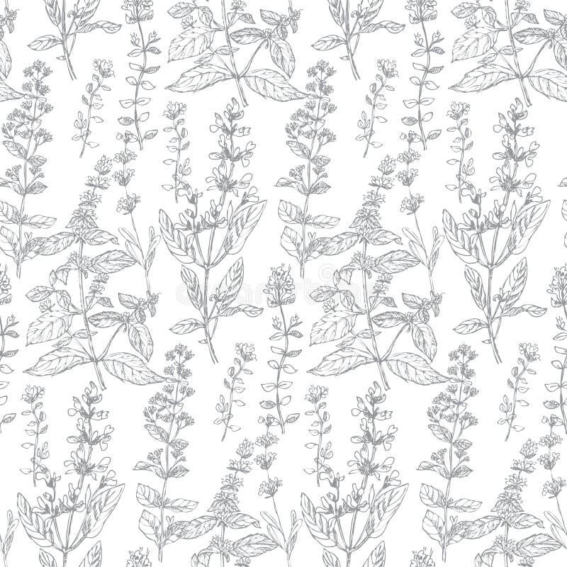 Modèle sans couture de croquis de fines herbes tiré par la main pour le fond, wrappi illustration de vecteur