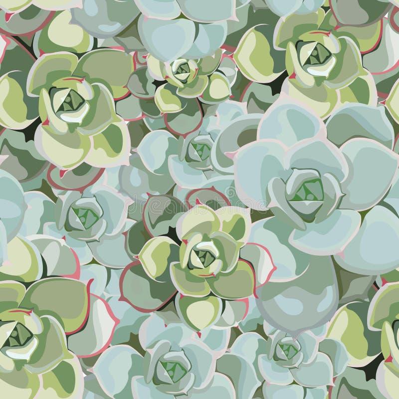 Modèle sans couture de fleur de ressort de vecteur avec des succulents Conception tendre élégante pour le fleuriste illustration libre de droits