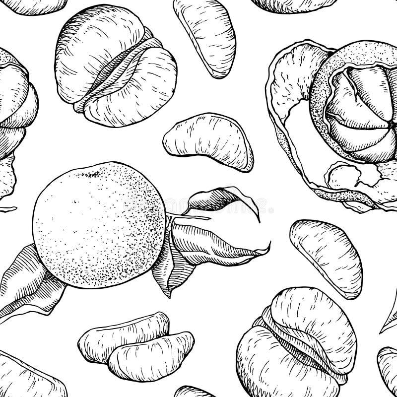 Modèle sans couture de mandarine tirée par la main de vecteur illustration libre de droits