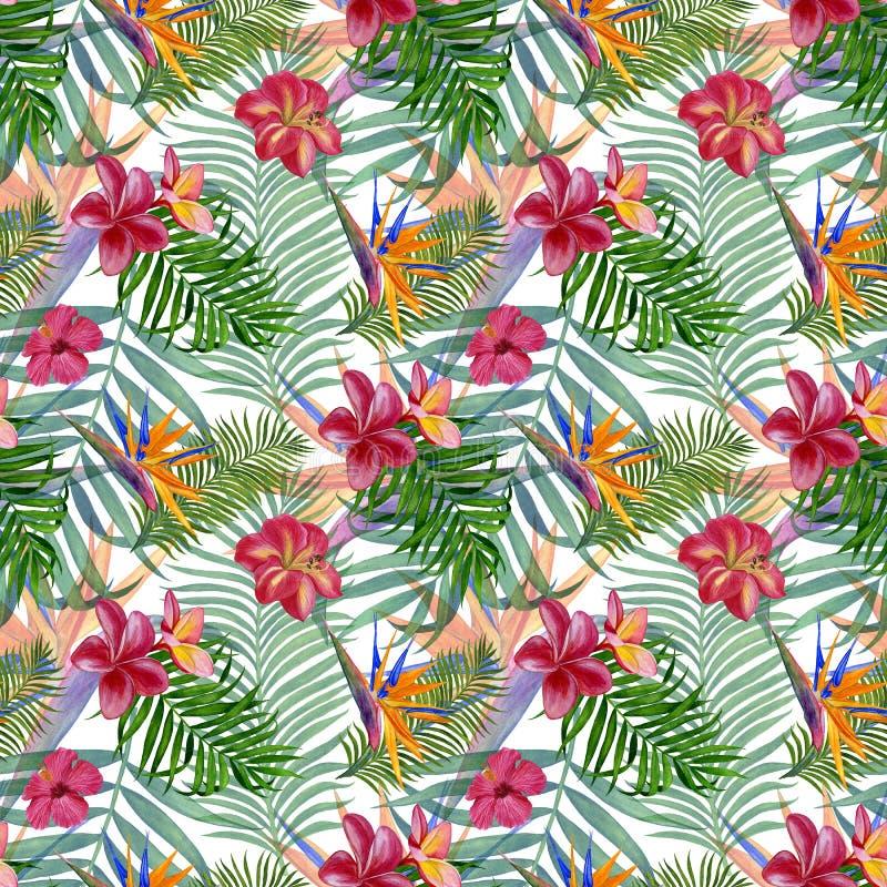 Modèle sans couture de plantes tropicales pour le tissu, le papier peint et le papier d'emballage Illustration d'aquarelle de la  illustration libre de droits