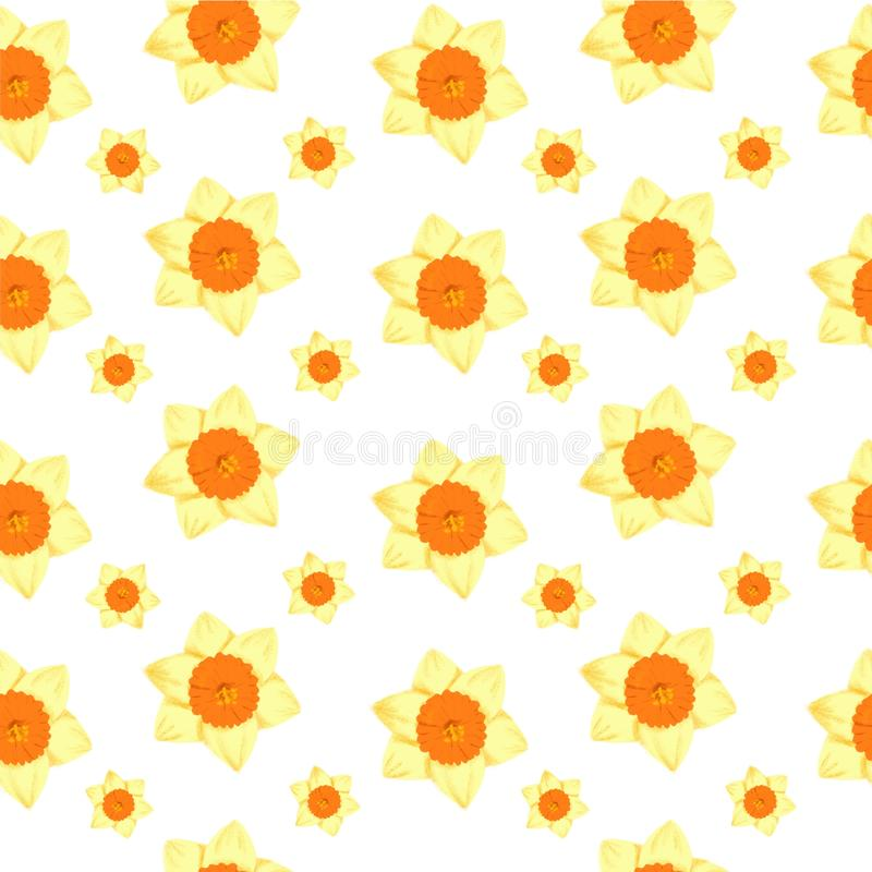 Modèle sans couture de ressort - croquis de fleur de jonquille de jonquille de narcisse pour l'illustration de mode, impression,  illustration libre de droits