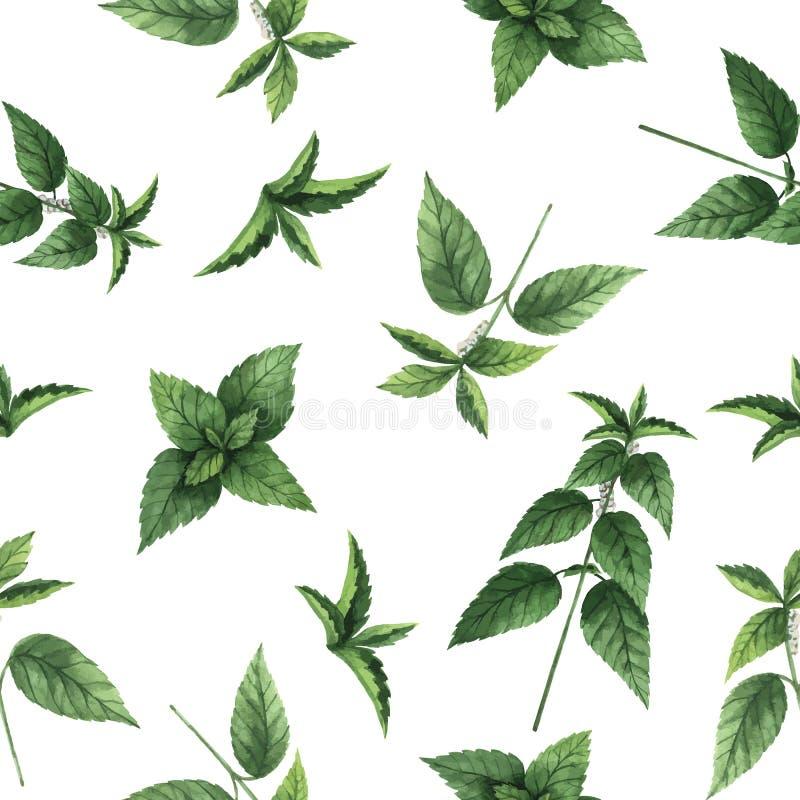 Modèle sans couture de vecteur d'aquarelle avec des fleurs et des branches d'ortie illustration stock