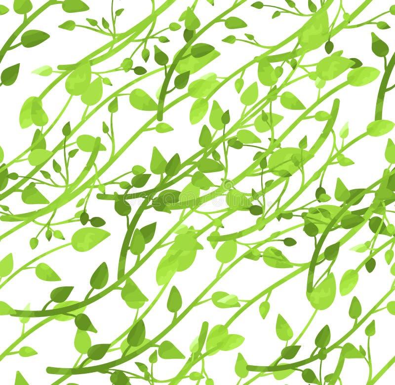 Modèle sans couture de vecteur, feuilles de ressort, branches vert clair d'aquarelle sur le fond blanc illustration stock