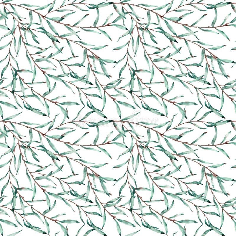 Modèle sans couture des branches de saule avec des feuilles sur le fond blanc Illustration d'aquarelle illustration de vecteur
