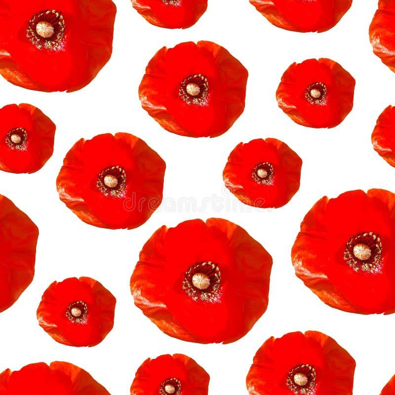 Modèle sans couture des fleurs réalistes de pavot Pavots rouges d'isolement sur un fond blanc illustration de vecteur