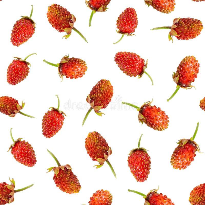 Modèle sans couture des fraisiers communs mûrs photo stock
