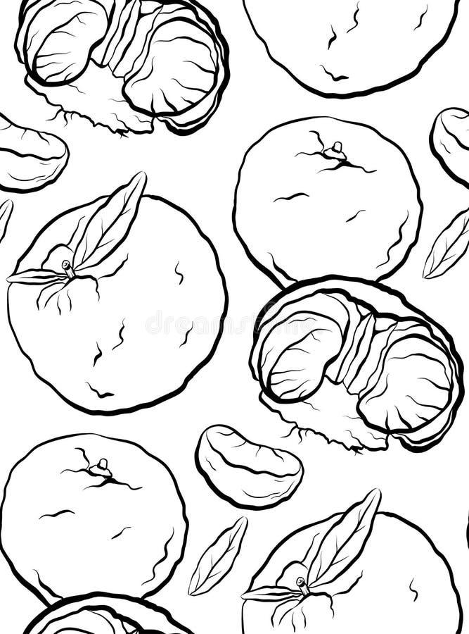 Modèle sans couture des illustrations de bande dessinée de découpe de mandarine et d'agrume Texture de vecteur illustration de vecteur