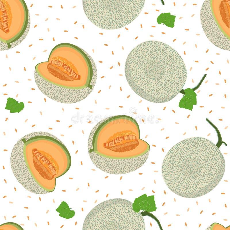 Modèle sans couture entier de melon sur le fond blanc, fond frais de modèle de melon de cantaloup, vecteur de fruit illustration de vecteur