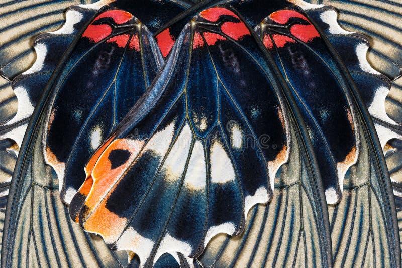 Modèle sans couture fait à partir de l'aile colorée de papillon pour le backgroun photo stock