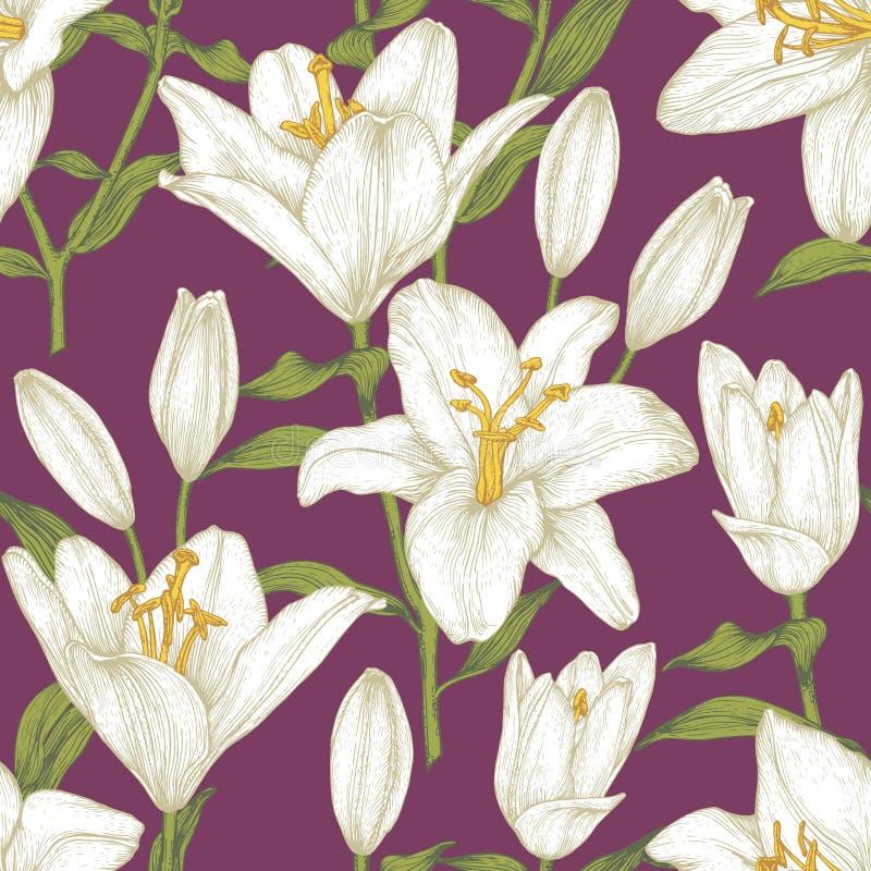 Modèle sans couture floral de vecteur avec les lis blancs illustration libre de droits