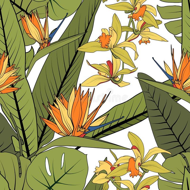 Modèle sans couture floral de verdure tropicale lumineuse d'été Oiseau exotique de strelitzia des fleurs de phalaenopsis d'orchid illustration de vecteur