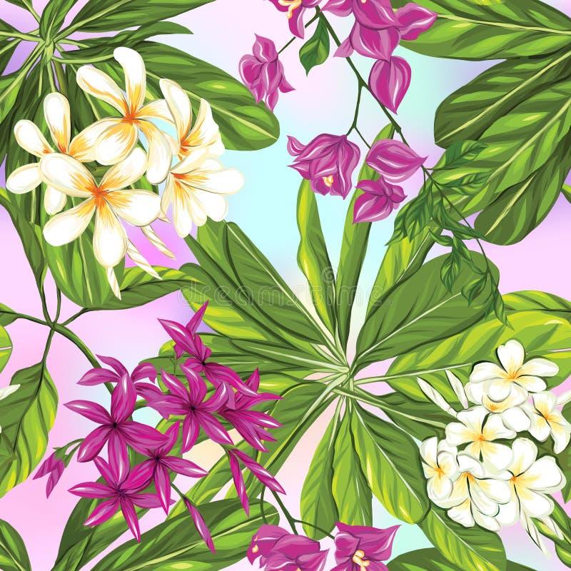 Modèle sans couture, fond avec des plantes tropicales : monstera, strelitzia, bouganvillée, illustration stock