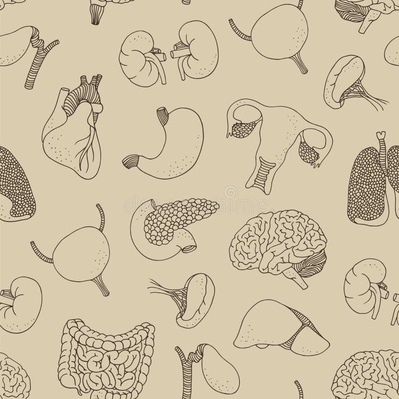 Modèle sans couture humain d'organes internes illustration stock