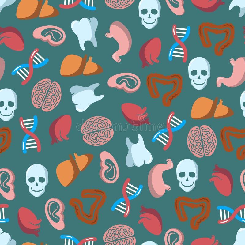 Modèle sans couture interne d'organes humains illustration libre de droits
