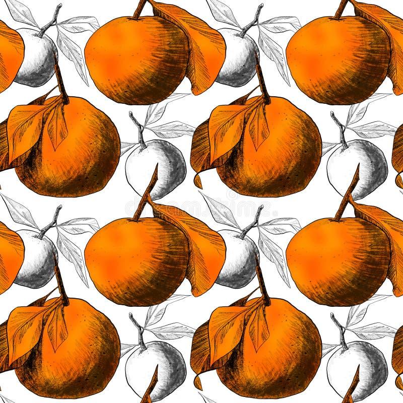 Modèle sans couture : mandarines ou pommes, dessins au crayon uniques des fruits combinés dans de belles compositions illustration stock
