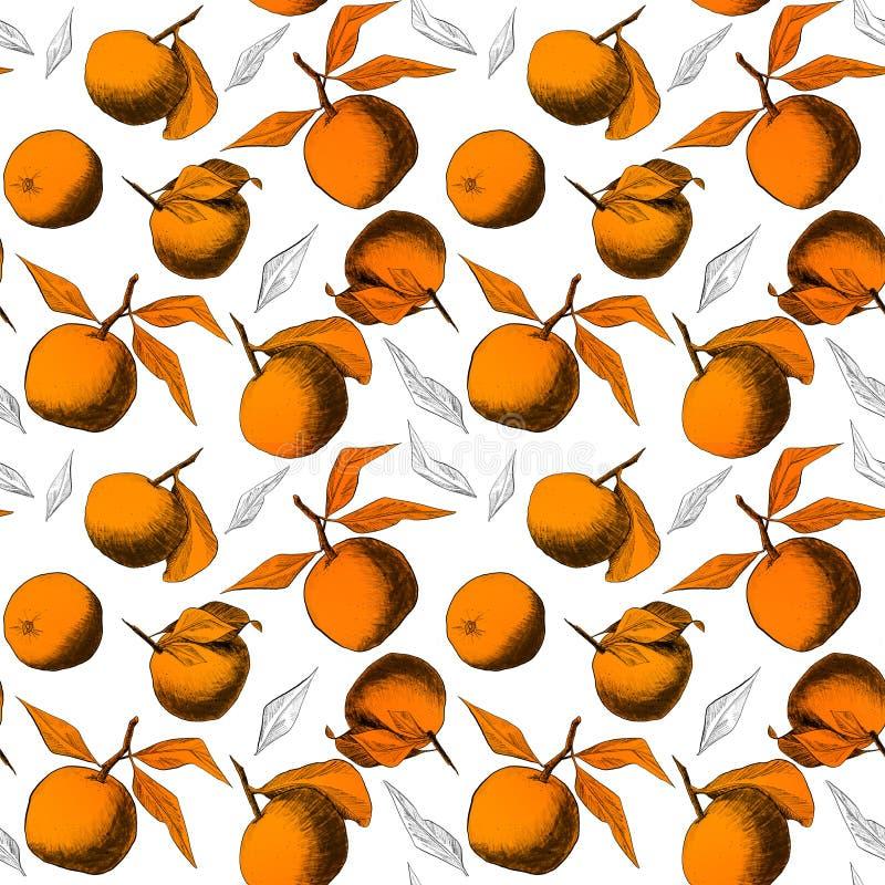 Modèle sans couture : mandarines ou pommes, dessins au crayon uniques des fruits et feuilles combinées dans de belles composition illustration libre de droits