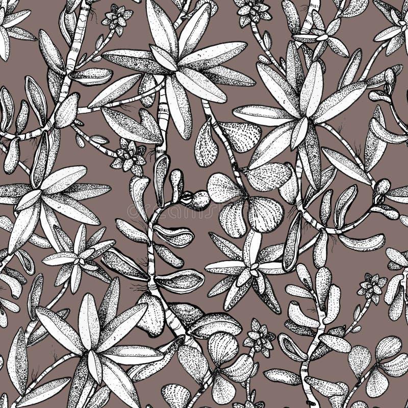 Modèle sans couture tiré par la main avec des succulents illustration libre de droits