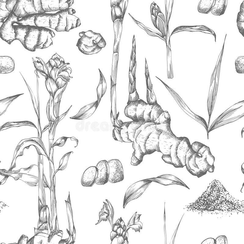 Modèle sans couture tiré par la main des racines, des vies et des fleurs de gingembre dans la couleur noire d'isolement sur le fo illustration de vecteur