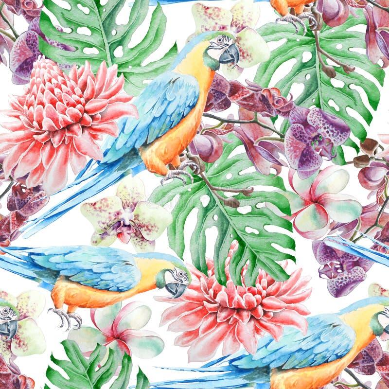 Modèle sans couture tropical avec des feuilles et des fleurs d'oiseaux Perroquet Etlingera Monstera Orchidée Illustration d'aquar illustration stock
