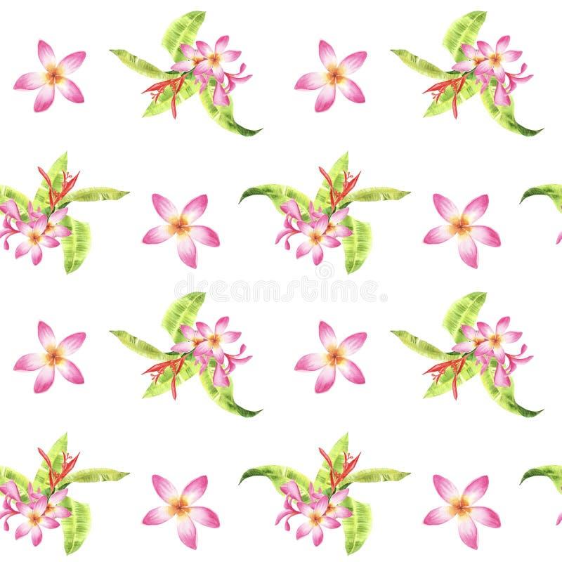 Modèle sans couture tropical floral d'aquarelle avec les feuilles vertes de monstera et les fleurs roses de plumeria sur le blanc illustration libre de droits