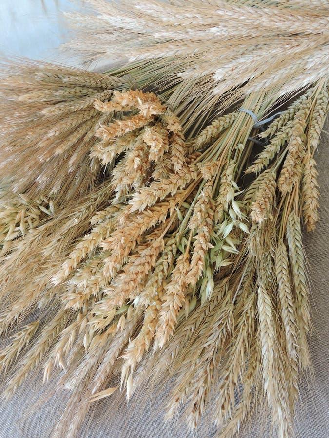 Modèle sec différent d'agriculture photo stock