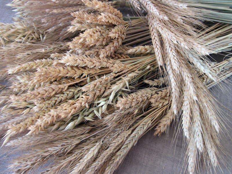 Modèle sec différent d'agriculture photographie stock