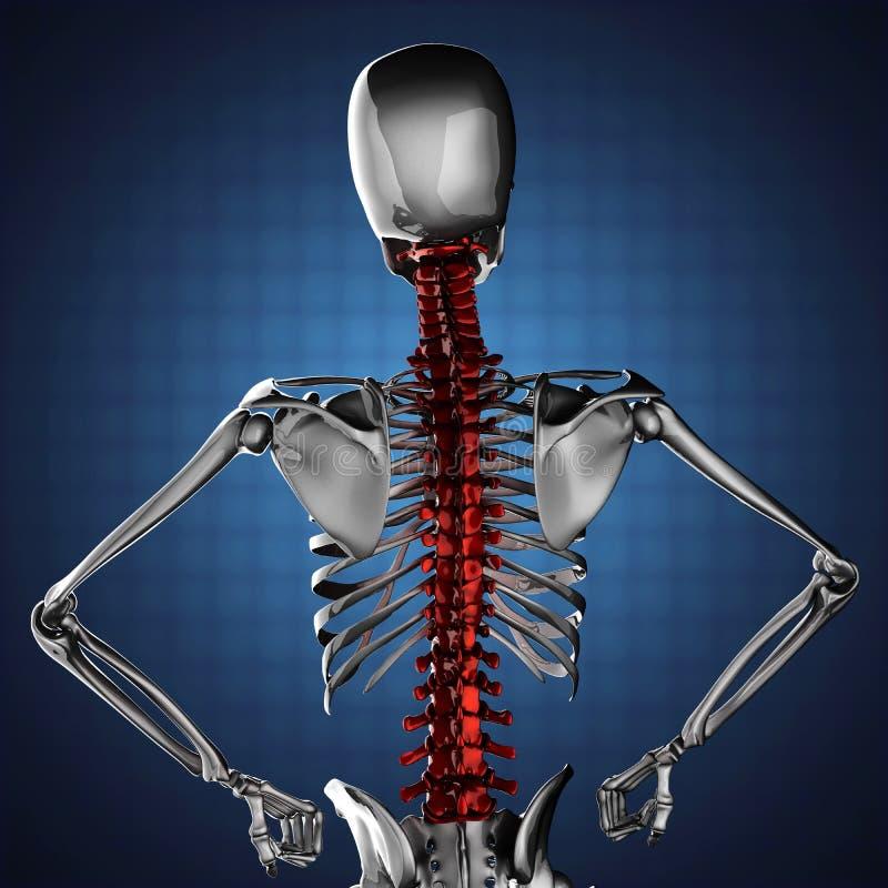 Modèle squelettique humain sur le fond bleu illustration stock