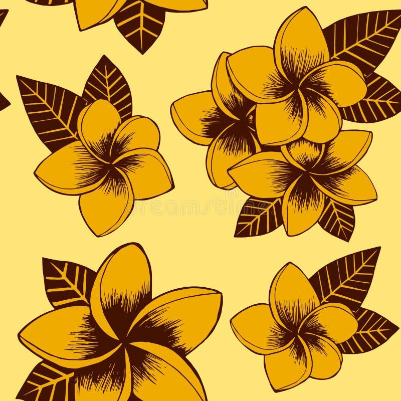 Modèle tiré par la main floral jaune de plumeria de vecteur sans couture illustration libre de droits